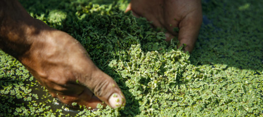 tagli agricoltura italiana bilancio ue
