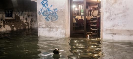 inquinanti acqua laguna venezia