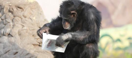 antenati scimmie intelligenza