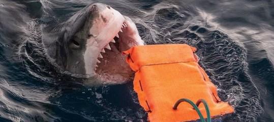 materiale mute anti squalo
