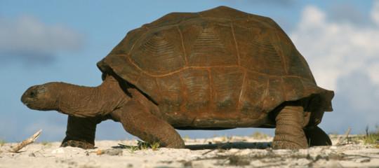 scoperta intelligenza tartarughe giganti