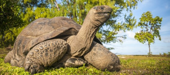 tartarughe giganti memoria