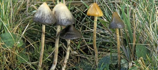 depressione funghi allucinogceni magici