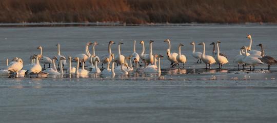 uccelli migratori cambiamenti climatici