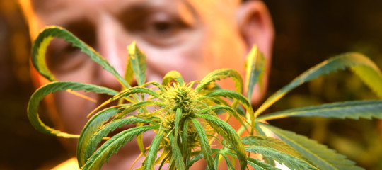 coltivare cannabiscasa cassazione