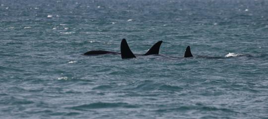 orche genova messina italia