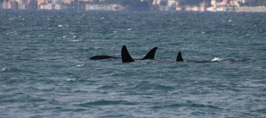 Orche stretto messina Scilla genova