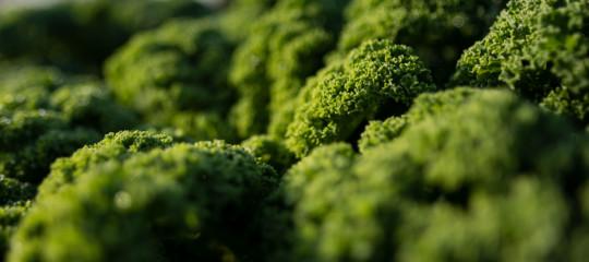suono piante stress ultrasuoni