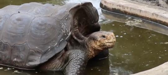 diego tartaruga gigante