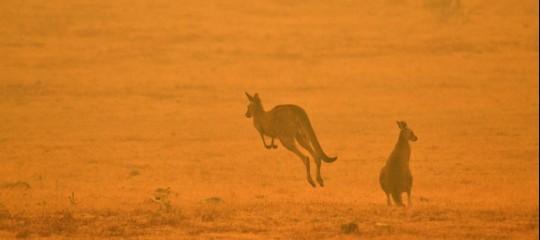 rogo Sydney incendi australia