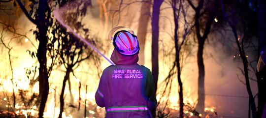 Australia pini 'preistorici' salvati incendi
