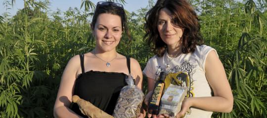 via libera cannabis cibo coldiretti