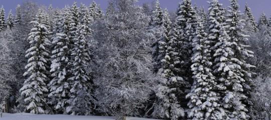 legno foreste clima finlandiadavide tabarelli