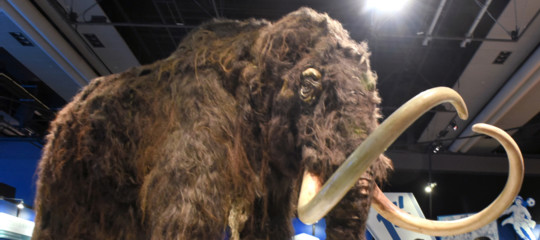 clonazione mammut lanoso