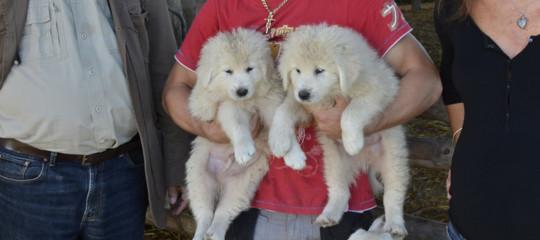 Cuccioli cane affogati fontanile