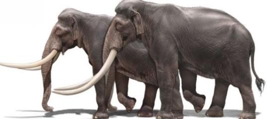 elefantipreistorici nani