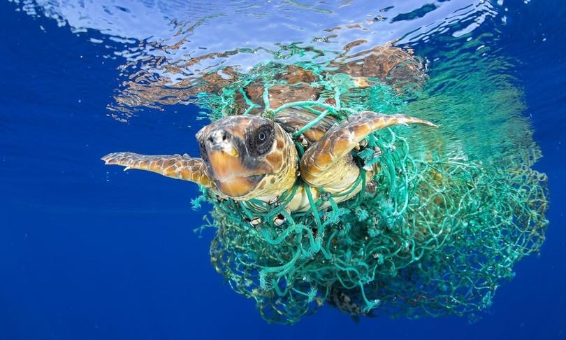 tartarughe plastica mare