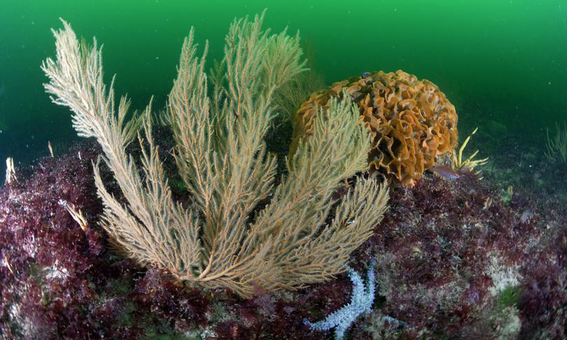 batterio clamidia oceano