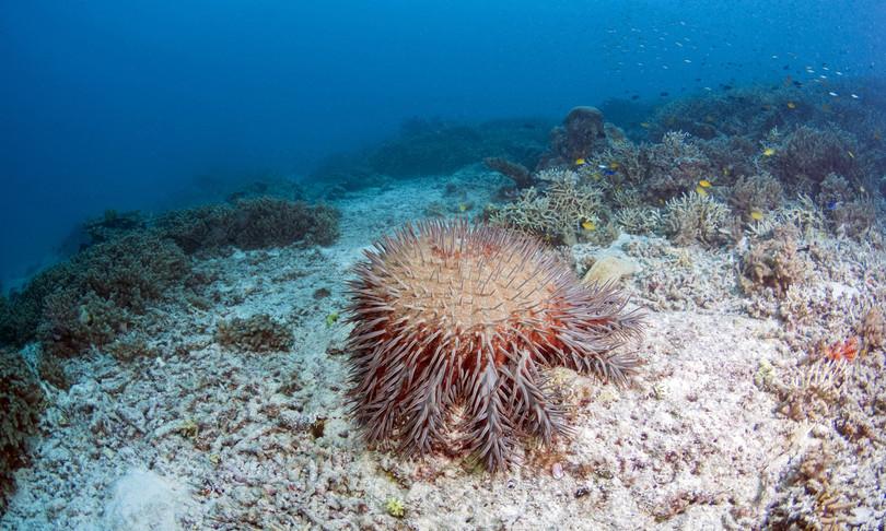 ambiente sbiancamento barriera corallina