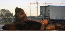 Le città riconquistate dagli animali
