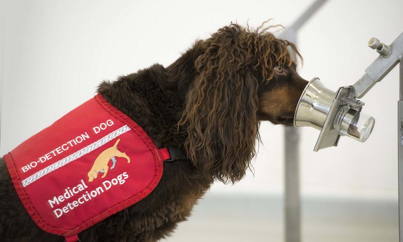 Contro il Coronavirus scende in campo un'equipe di cani