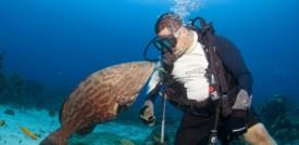 È tempo di salvare gli oceani