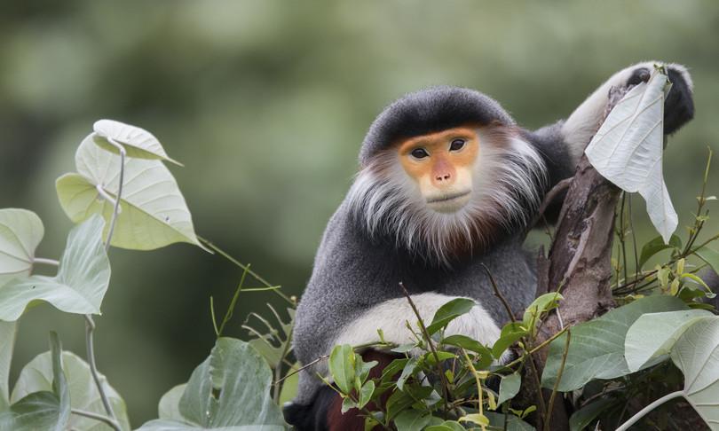 Le scimmie hanno schemi di pensiero simili all'uomo