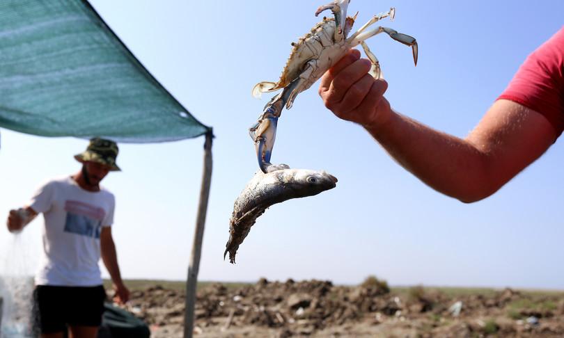 clima granchio blu bestia nera pesca albania mediterraneo