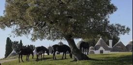 """Il Festival dei Sensi, primo """"safari culturale"""" d'Italia"""