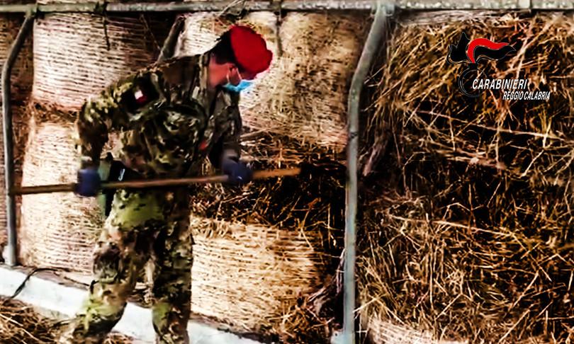 Reggio Calabria armi nascoste stalla