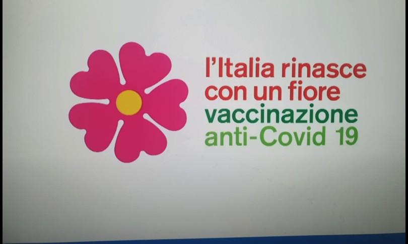 fiore primula vaccino covid italia boeri arcuri