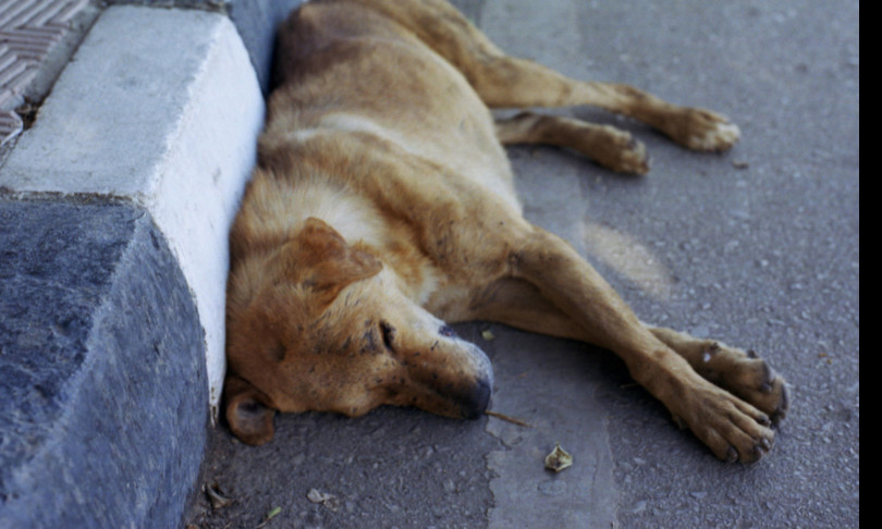 In Italia viene avvelenato un cane ogni 16 minuti
