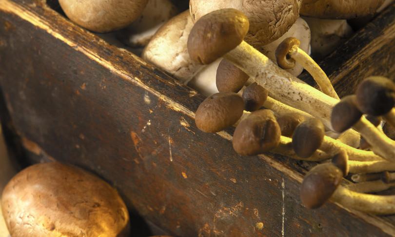edilizia futuro funghi cemento
