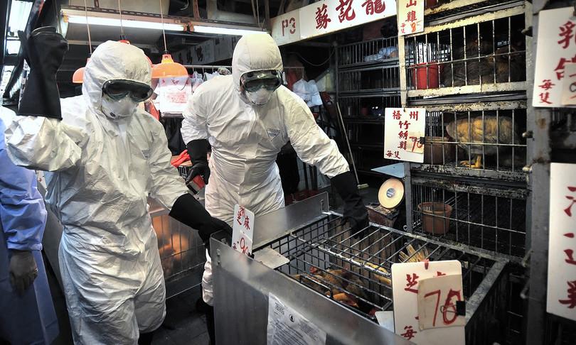 primo caso trasmissione a uomo di influenza aviaria h5n8