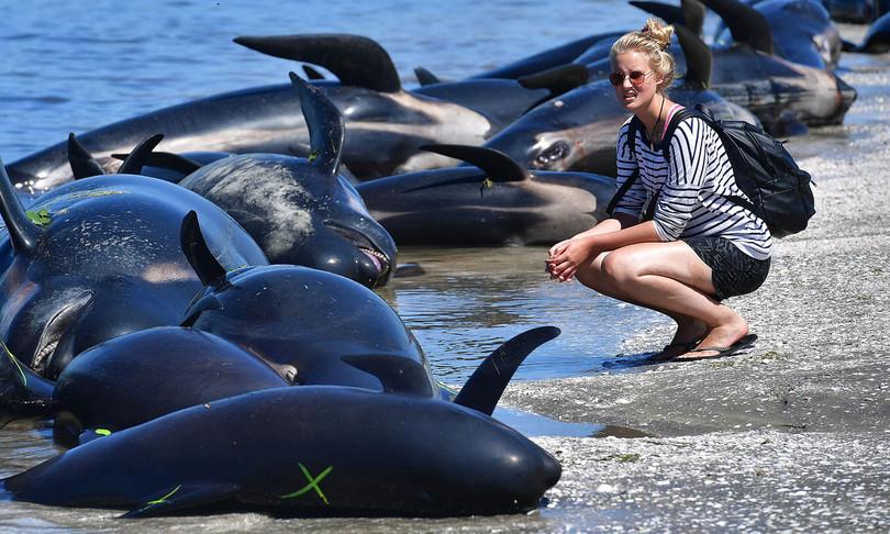 nuova zelanda balene arenate morte