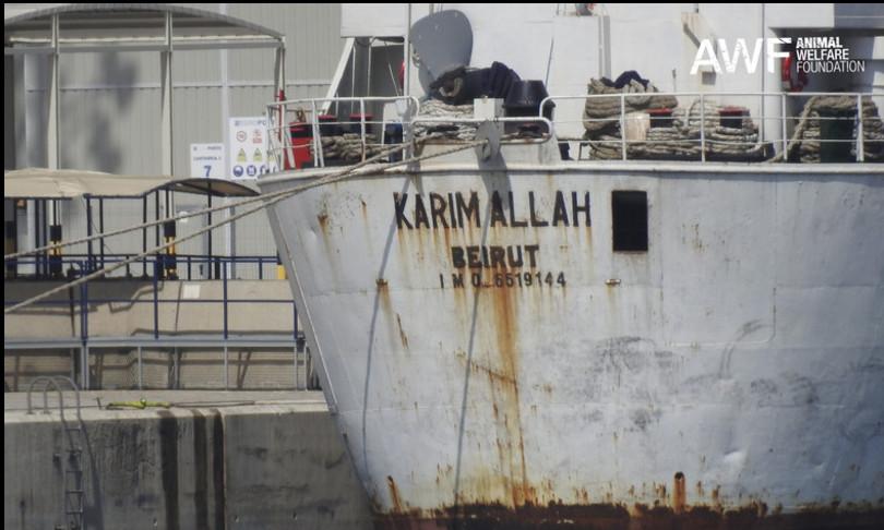 vitelli navemediterraneo denuncia animalisti cagliari