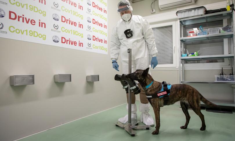 cani riconoscono malati da sudore studio