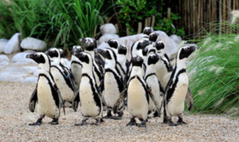 bioparco roma cammellina pinguini
