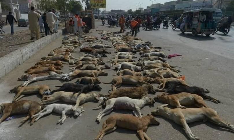 strage cani uccisi a fucilate pakistan denuncia oipa
