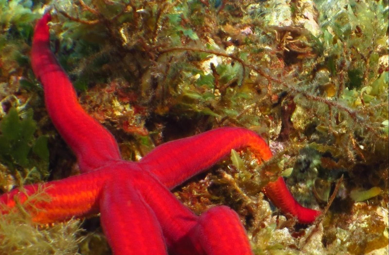L'area marina protetta di Capo Milazzo
