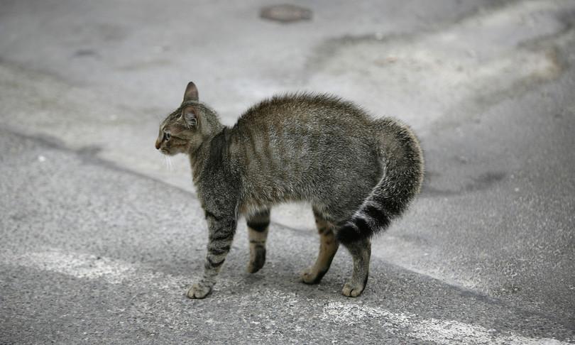 gran bretagna trasmissione covid da uomo a gatto