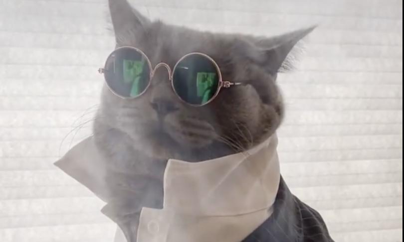 gatto ponzu instagram