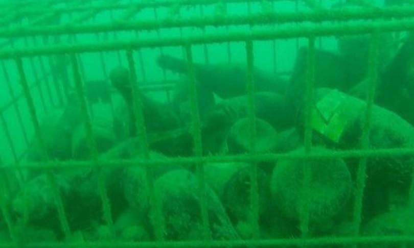 talamone cantina prosecco in fondo al mare