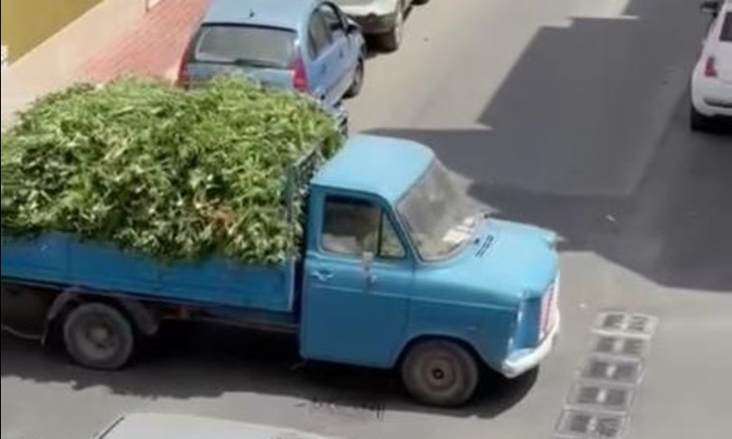 Mille piante marijuana sequestrate camion sfila a Vittoria sicilia