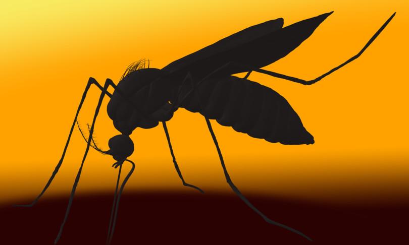 Scienza Usa rilasciate prime zanzare geneticamente modificate