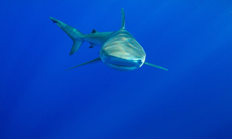 squali campo magnetico terra