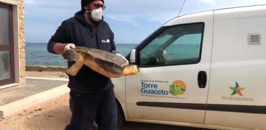 In Salento pescatori e scienziati si sono alleati per difendere le tartarughe