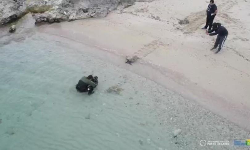 salento pescatori scienziati alleati difendere tartarughe