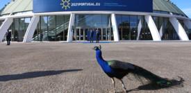 Il pavone che ha interrotto Draghi mentre parlava