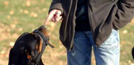 Padrone stressato e ansioso? Lo diventa anche il cane